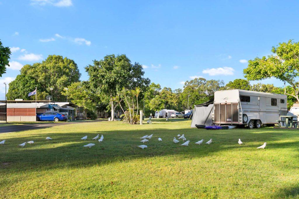 cockatoos, grass camping